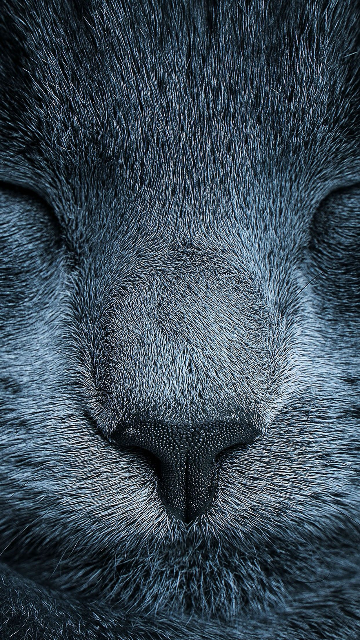 Sleeping Cat Eyes Closed Grey Close Up Smartphone Wallpaper And Lockscreen Hd Animales Animaux Chats Gris