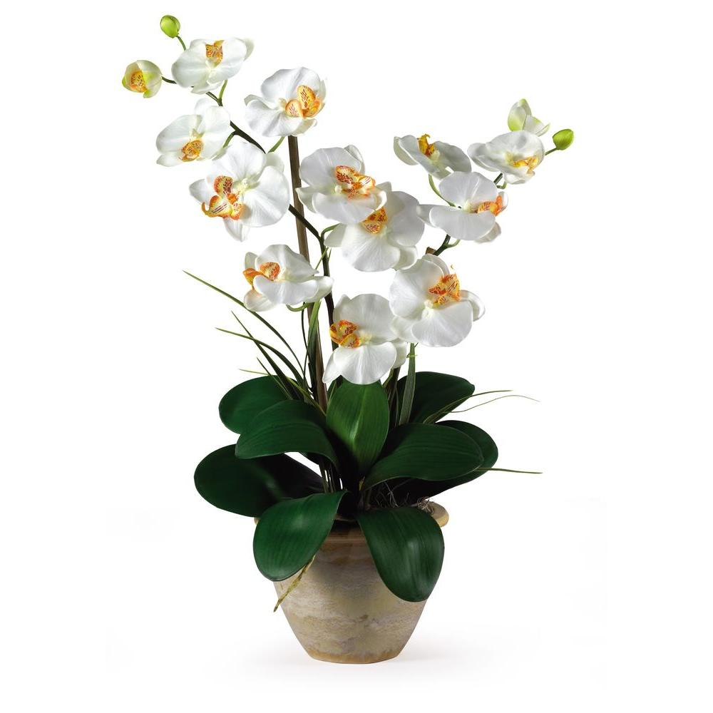 25 In Double Stem Phalaenopsis Silk Orchid Flower Arrangement Ivory Orchid Flower Arrangements Silk Orchids Silk Orchids Arrangements