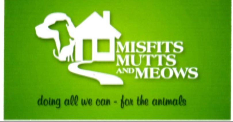 Get To Know Misfits Mutts And Meows Misfits Worlds Of Fun The Fosters