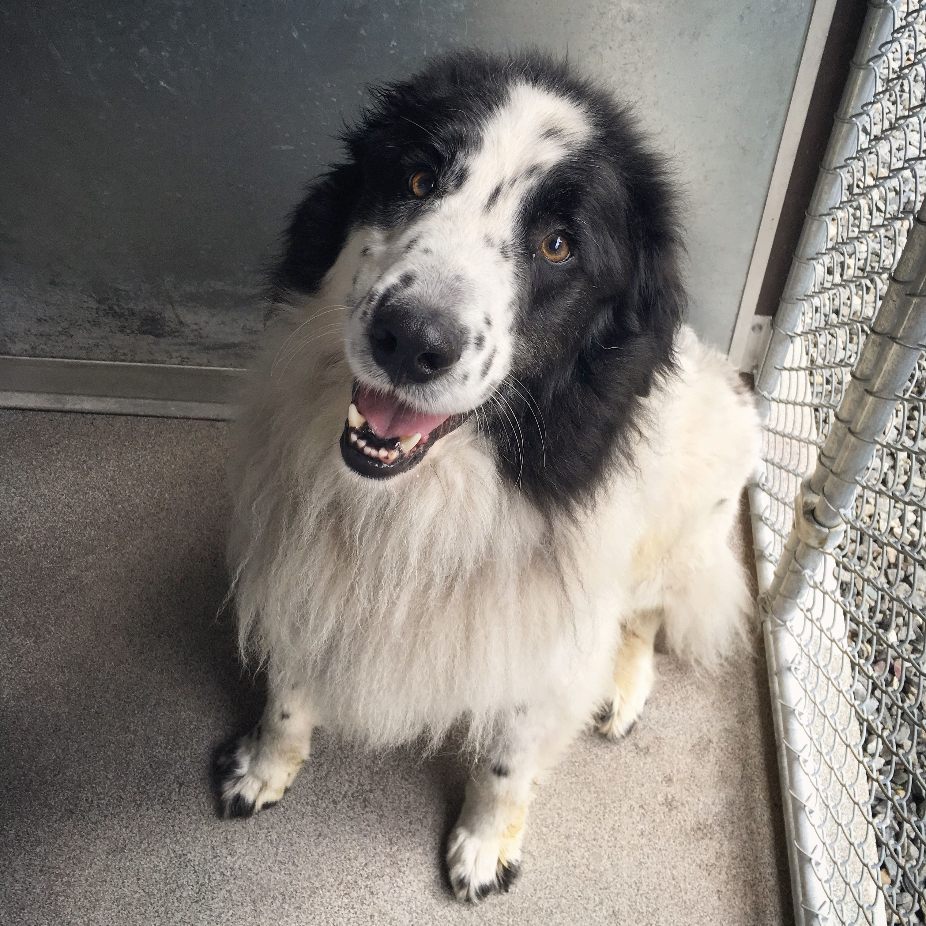 Adopt Merlin On Petfinder Dogs And Puppies Dog Adoption Animal Rescue