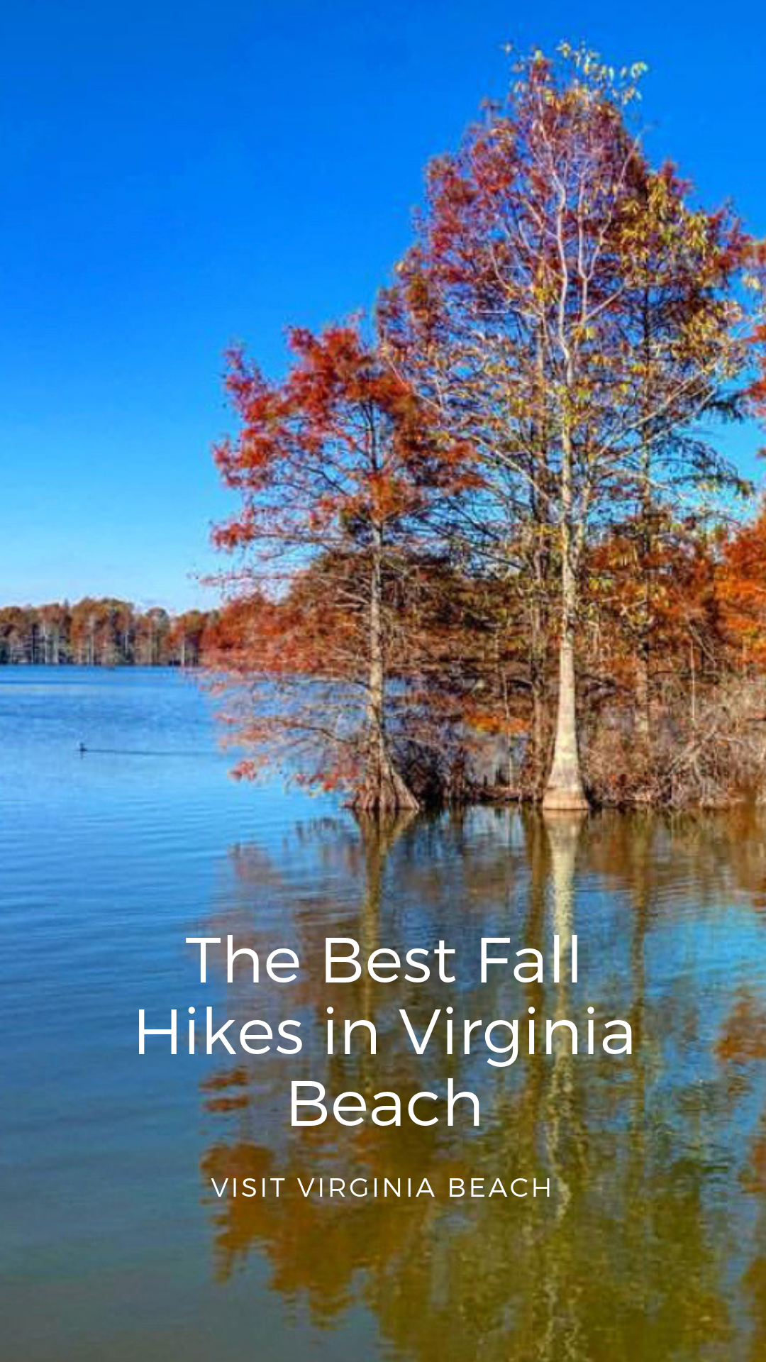 If You Love The Outdoors Check Out Best Fall Hikes In Va Beach