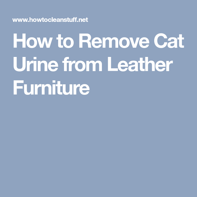 How To Remove Cat Urine From Leather Furniture Catsprayingodorremoval