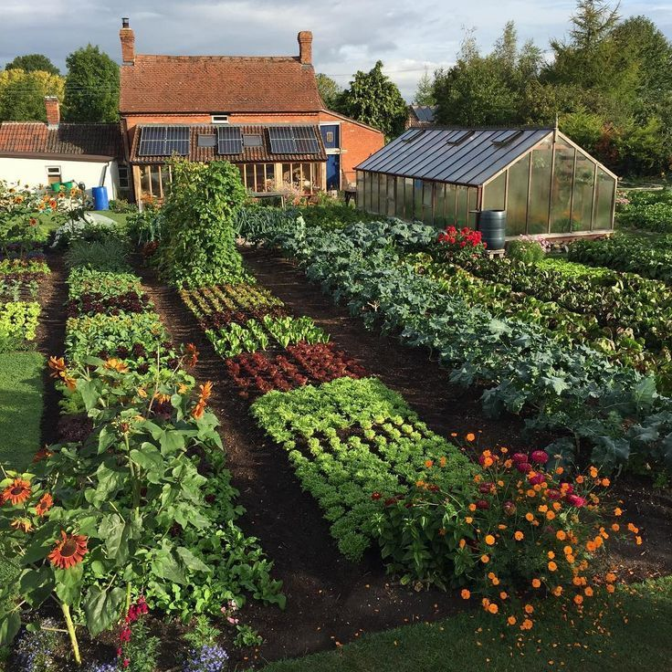"""Photo of Charles Dowding (@charles_dowding) posted on Instagram: """"The garden is as full as at any time of year and most of these veg are summer plantings after first harvests, #nodig makes it quick and no…"""" • Sep 16, 2018 at 10:25am UTC"""