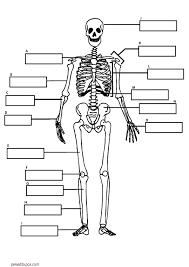 Resultado De Imagem Para Dibujos Esqueletos Para Ninos Actividades Del Cuerpo Humano Huesos Del Cuerpo Humano Sistemas Del Cuerpo Humano