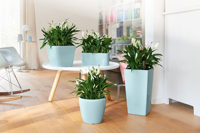 DELTA 20 | Living | Pinterest | Planters and Plants