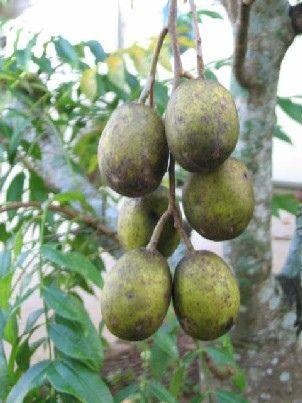 Buah Kedondong also known as Hog Plum and Ambarella Fruits on