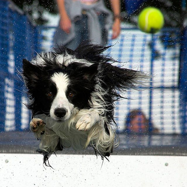 Keep your eye on the ball.. Border collie, Animals, Best