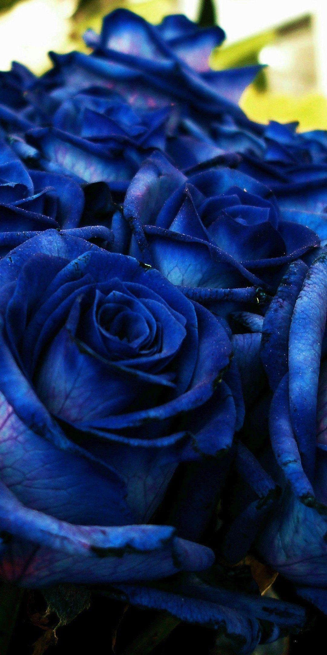 Pin By Paula Eggleston On Kartinki Rozy Blue Roses Wallpaper Cute Blue Wallpaper Blue Roses
