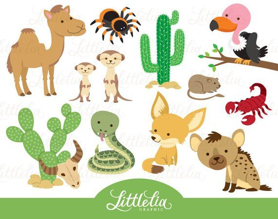 Desert Animals Pictures