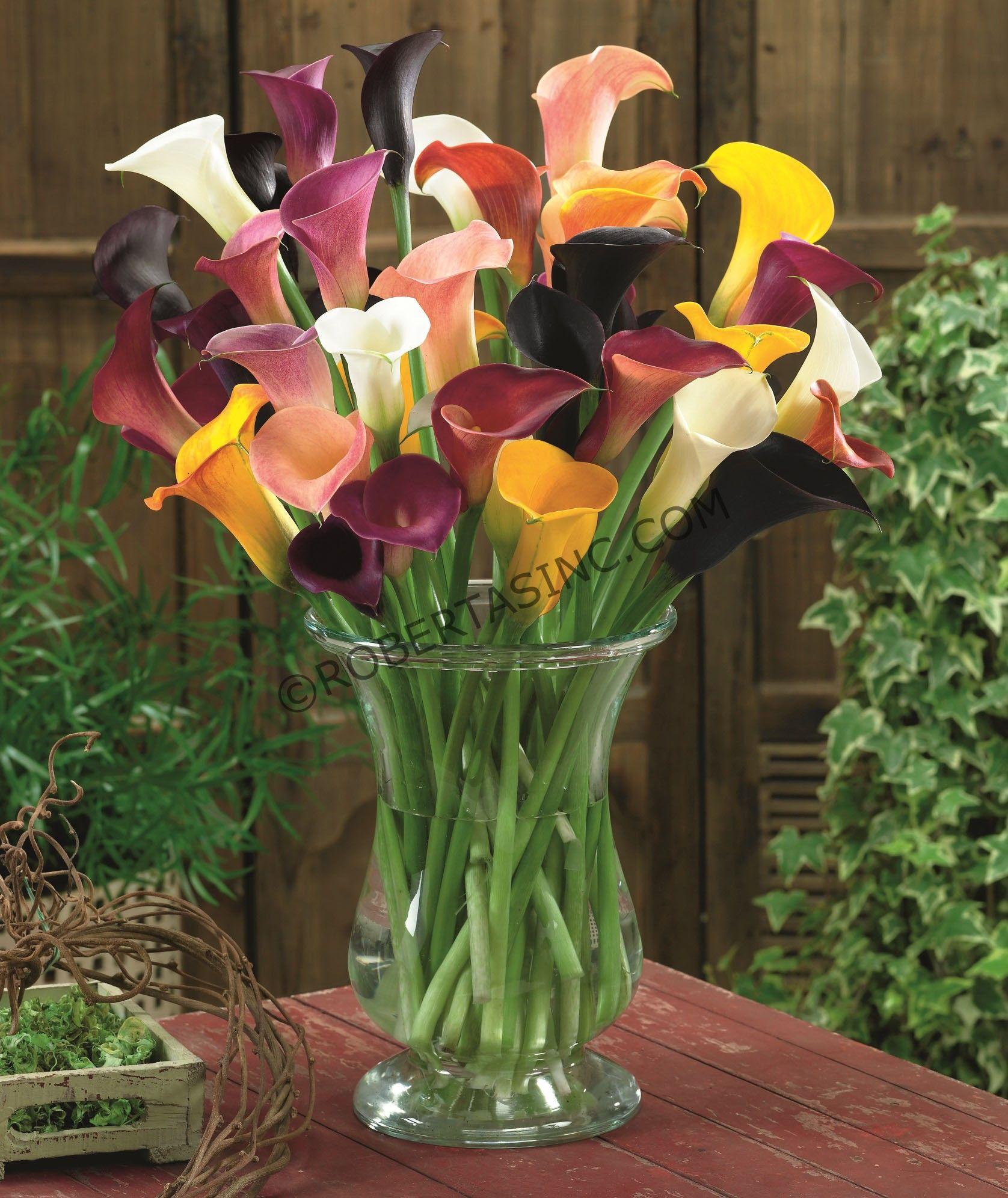 Image Result For Callas Flower Alcatras Amarillo Pinterest