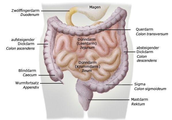 Aufbau Bauch