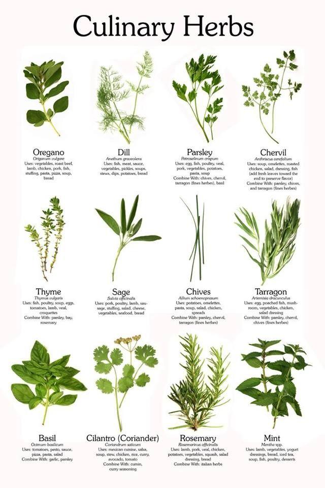 culinary herbs!
