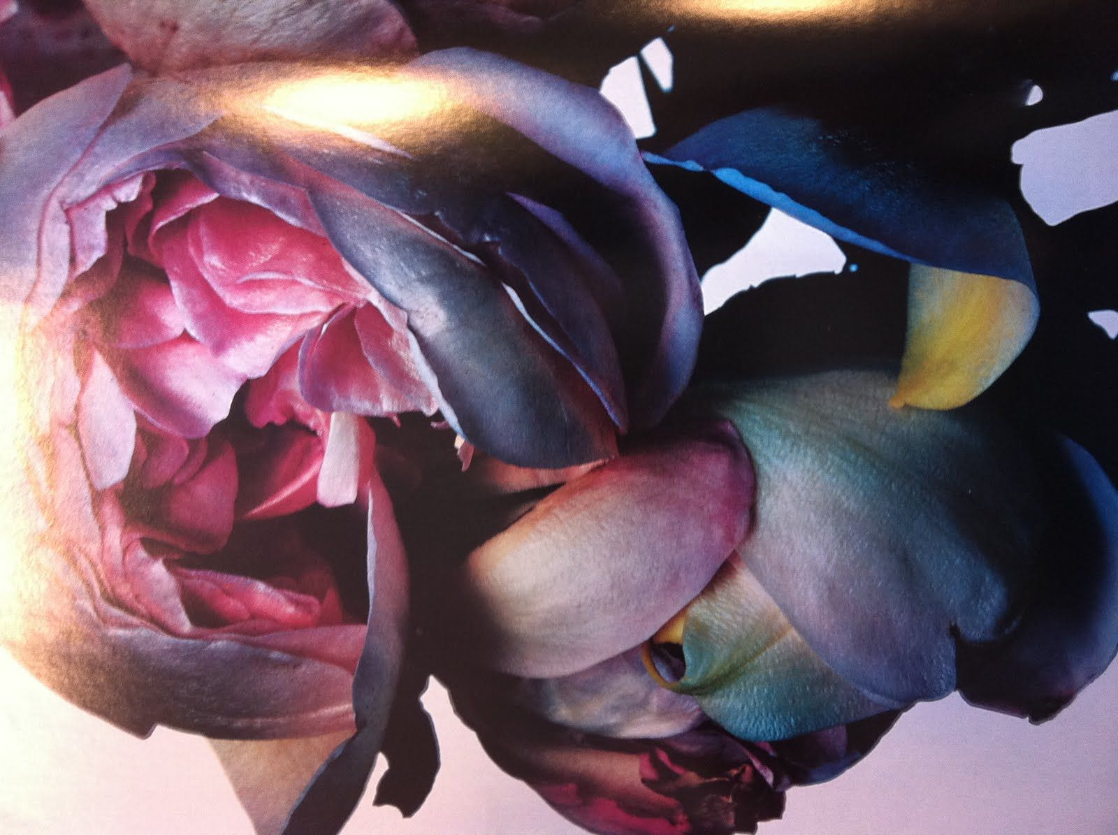 Rose 2003 by nick knight
