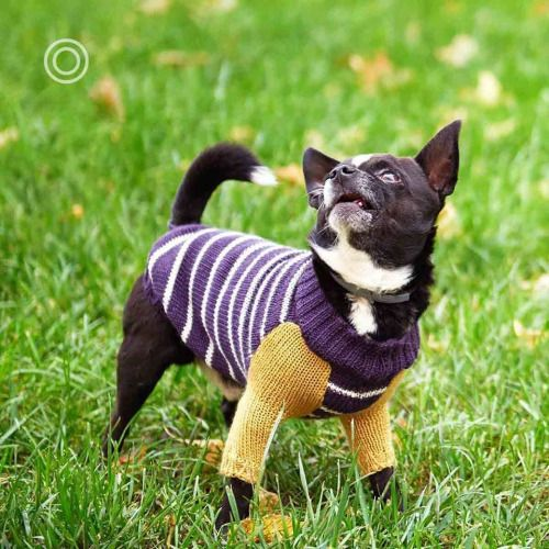 OTELLO. The Dog Pullover What do you mean, you forgot to bring my ...