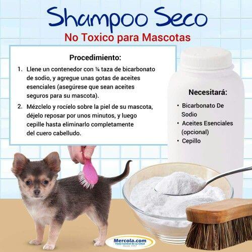 Shsmpoo Seco No Tóxico para Mascotas
