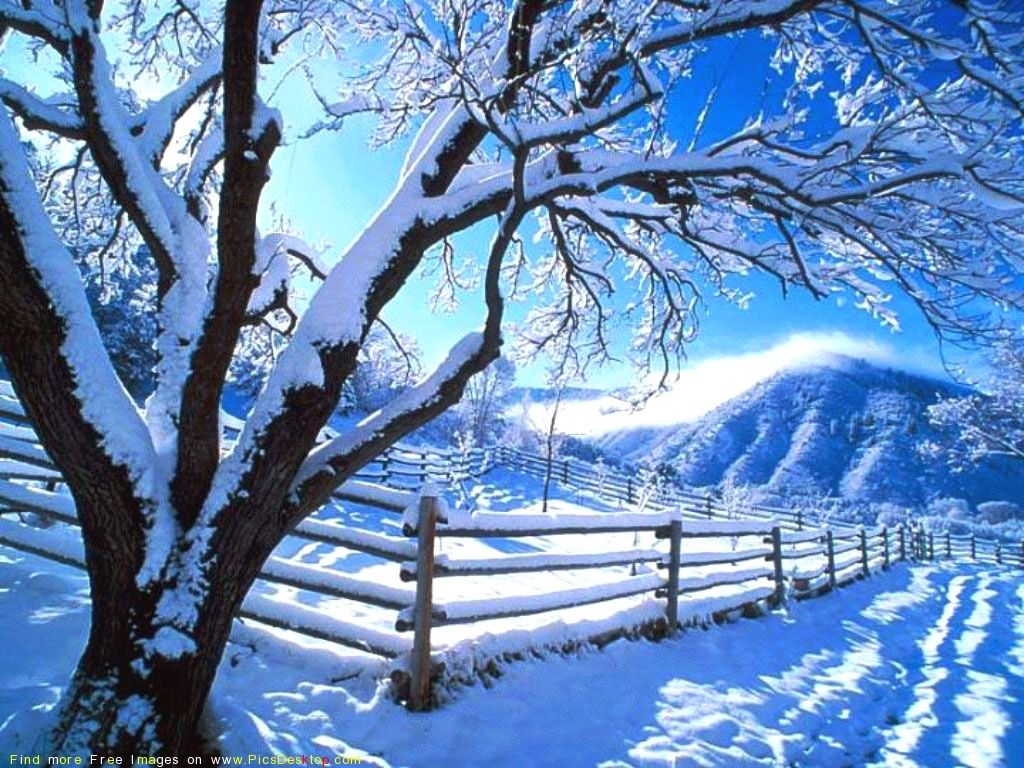 Cold Weather Cold Weather Nature Tree Wallpaper Winter Winter Scenery Winter Nature Winter Scenes