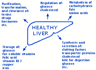 functions of the liver | nursing | pinterest | the o'jays, Human Body