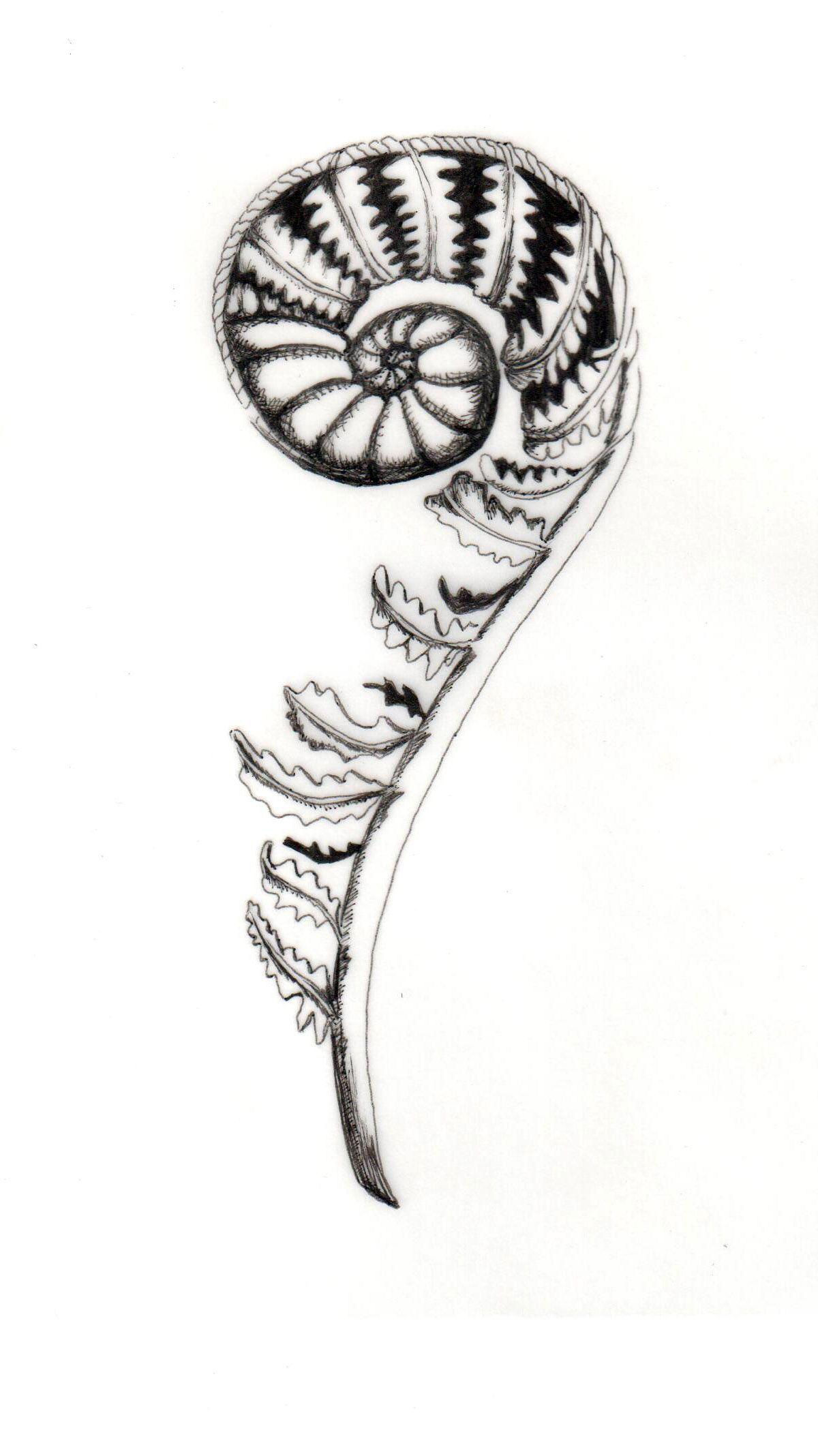 Fiddlehead Fern Illustration For Solstice By Kelsey Mosley