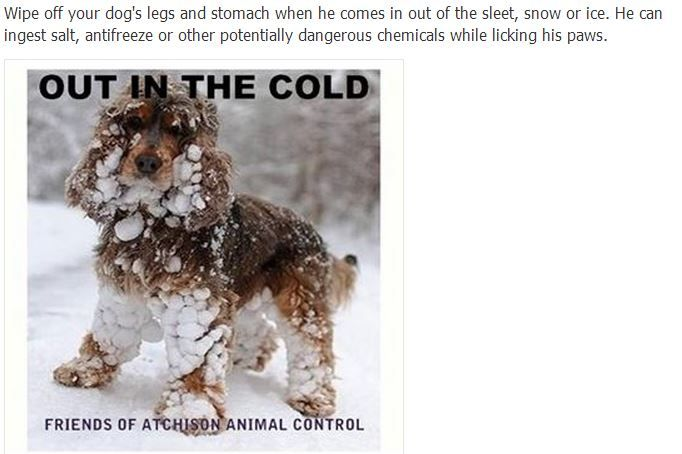 dogs in winter Dog leg, Dogs, Animal control