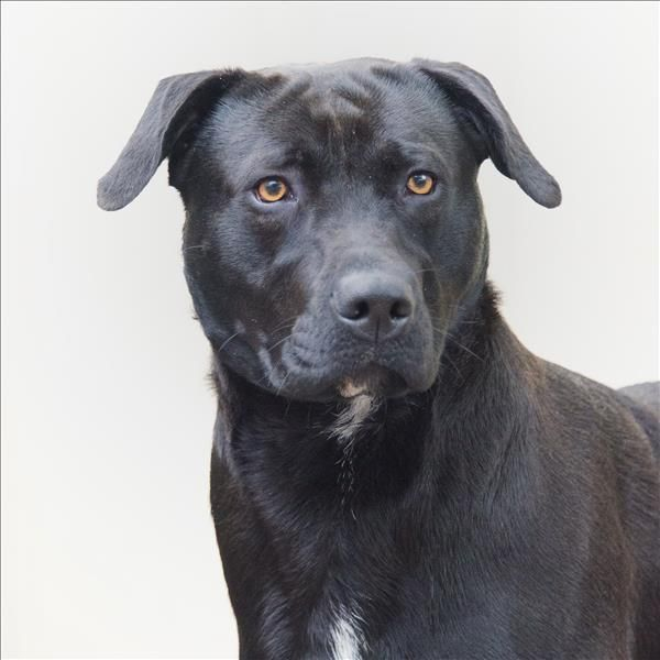 I Know My Name Is Monster But I M Truly A Sweetheart Come Meet Me At Rspca Toowoomba I Ll Be Waiting Adoption Animals Toowoomba