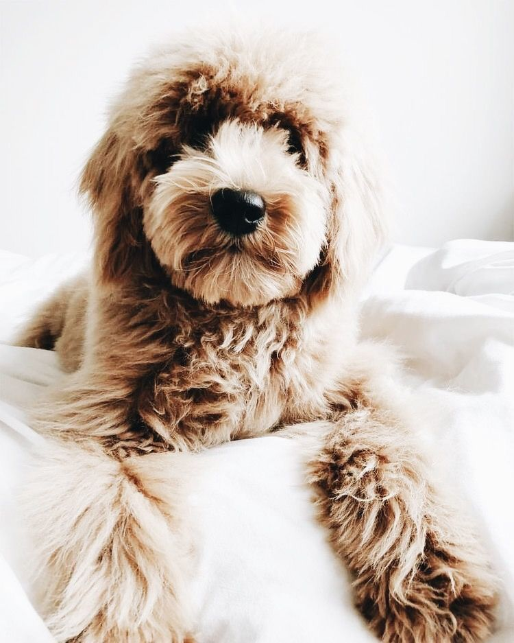 Pin By Kenzie Hull On Pupperoos Puppies Animals Dogs
