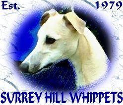 Surrey Hill Whippets Since 1979 Widget S Decendents Surrey