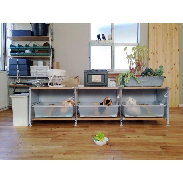家の中央にドッグラン 愛犬と仲良く暮らすための住まい Homify 家 犬と暮らす家 犬のトイレ