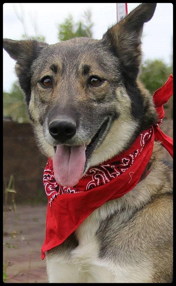 Adopt Emilia on German shepherd dogs, Dogs, Shepherd dog