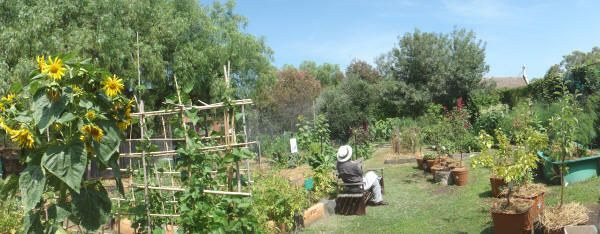 Community garden at Peppertree Place