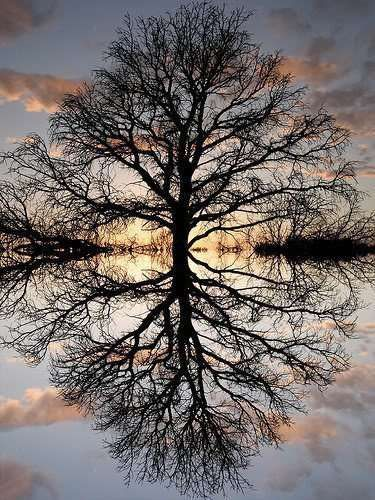 Baum auf dem Wasser
