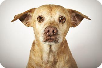 9 8 16 New York Ny Beagle Mix Meet Buddy A Dog For Adoption Http Www Adoptapet Com Pet 14168452 New York New York Dog Adoption Pets Adoptable Beagle