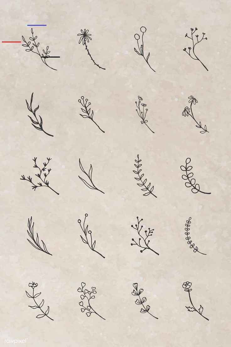 Tropical plant element vector set | premium image by rawpixel.com / sasi #vector #vectoart #digitalpainting #digitalartist #garphicdesign #sketch #digitaldrawing #doodle #illustrator #digitalillustration #modernart #leaves<br>