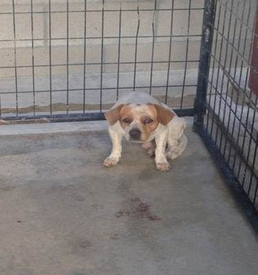 Ruff 05202015m D01 Located In Delano Ca Has 1 Day Left To Live