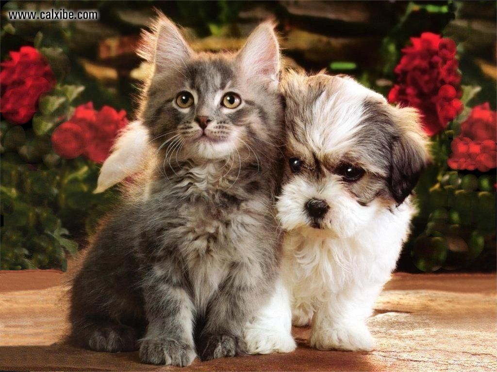 Home Made Cat Cat S Dog Cat Dogs And Cats Kitty Cat Pets Cats Make Cat How To Cat Cat Cat Cat Cute Cats In 2020 Cute Cat Gif Cute