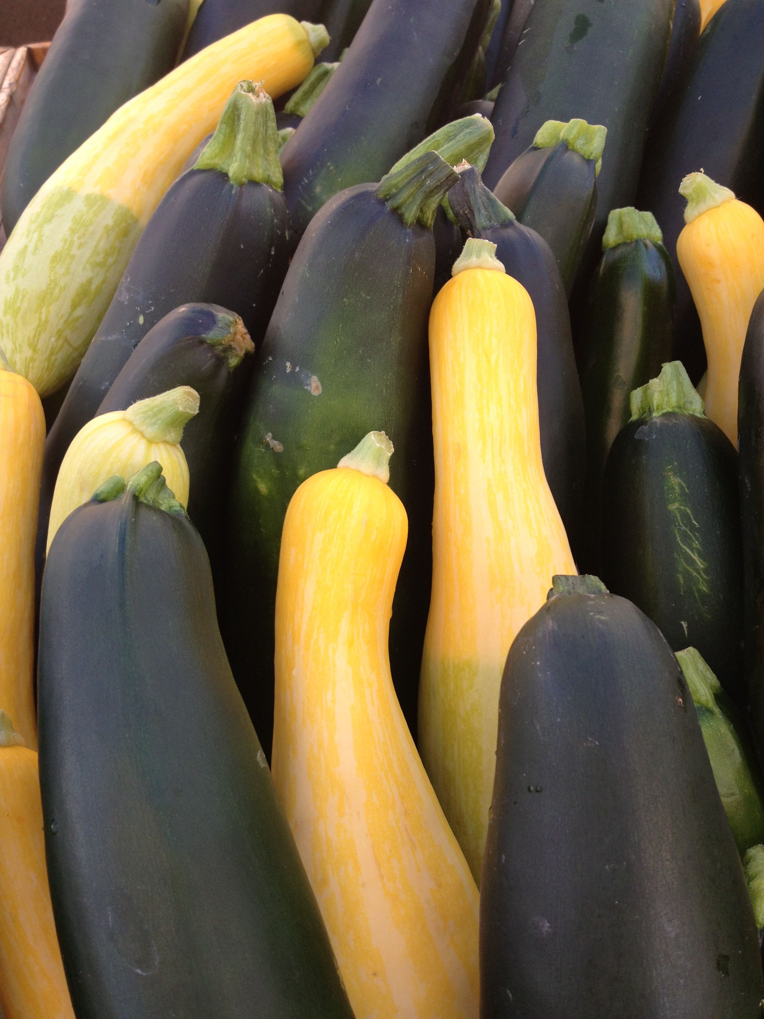 summer squash and zukes