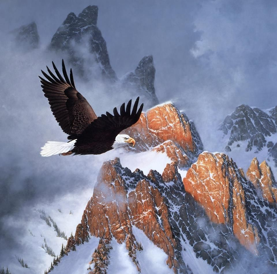 Pascal On Twitter Eagle Wallpaper Eagle Images Eagle Pictures
