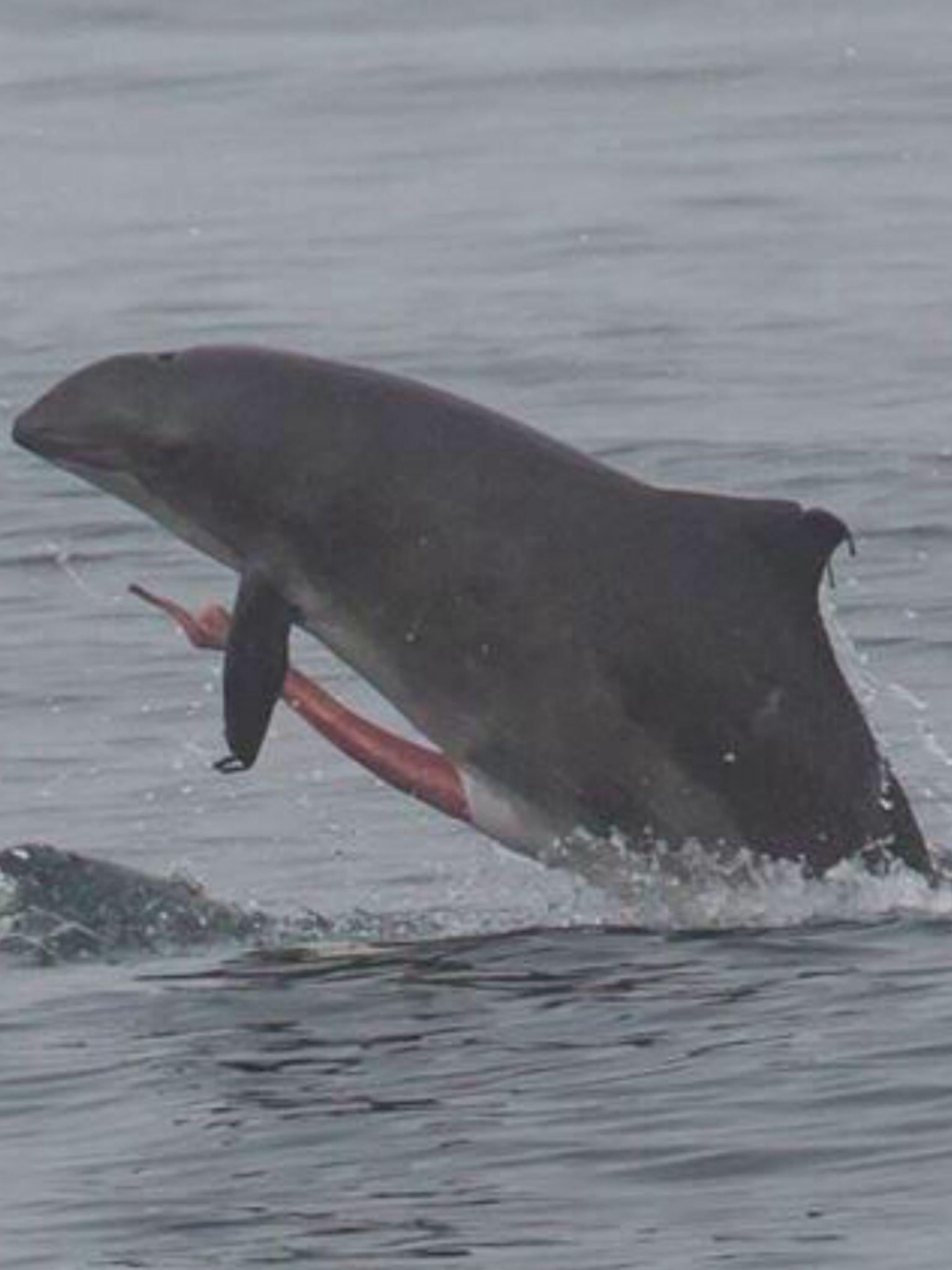 Dolfin Penis 76