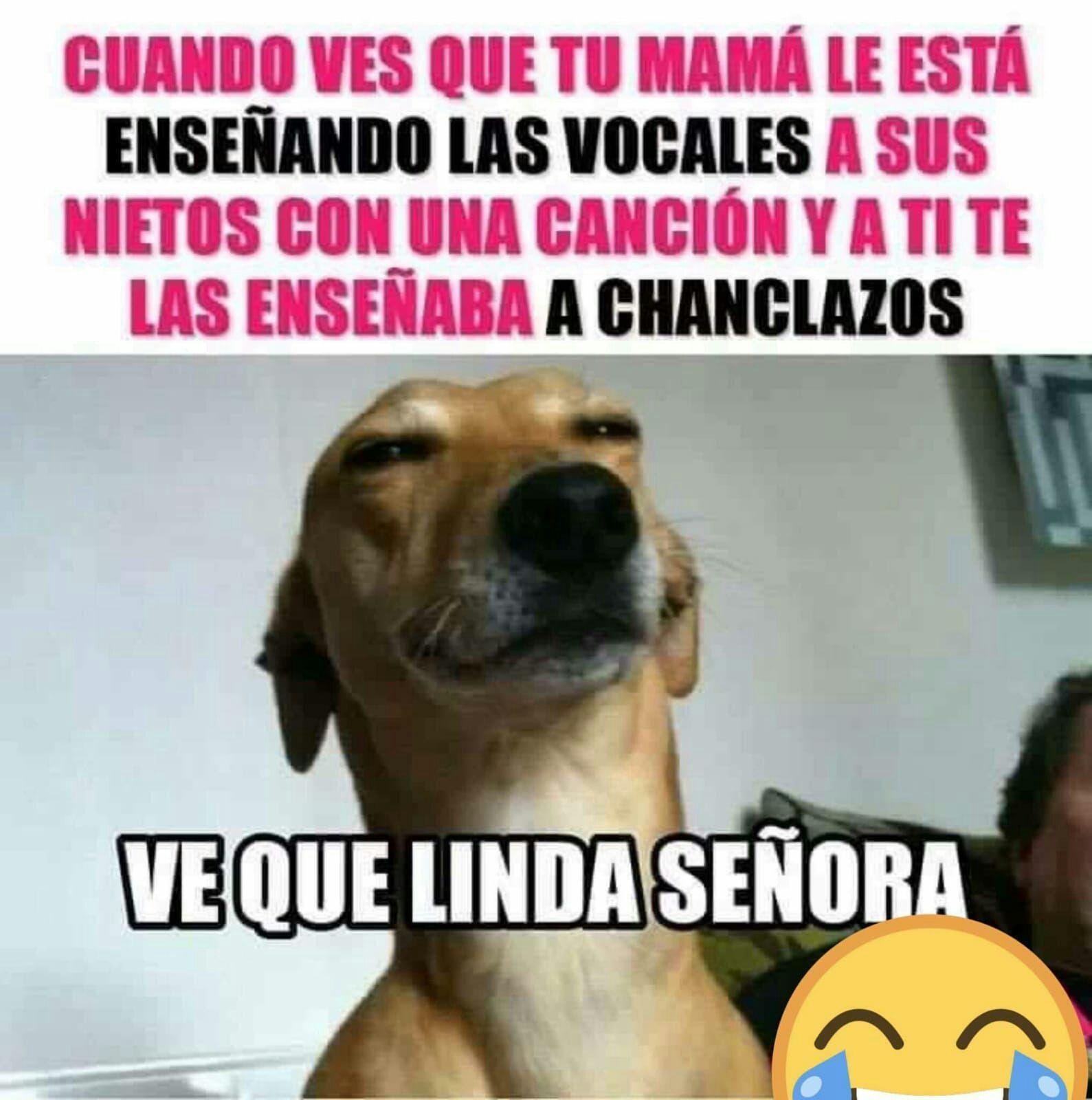Resultado De Imagen Para Firulais El Perro Dios Meme Imagenes Divertidas De Animales Memes Divertidos Sobre Perros Humor Divertido Sobre Animales