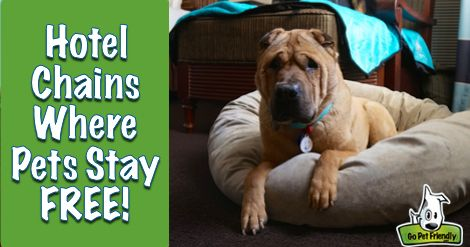 Pet Friendly Hotel Chains Where Pets Stay Free Pet Friendly Hotels