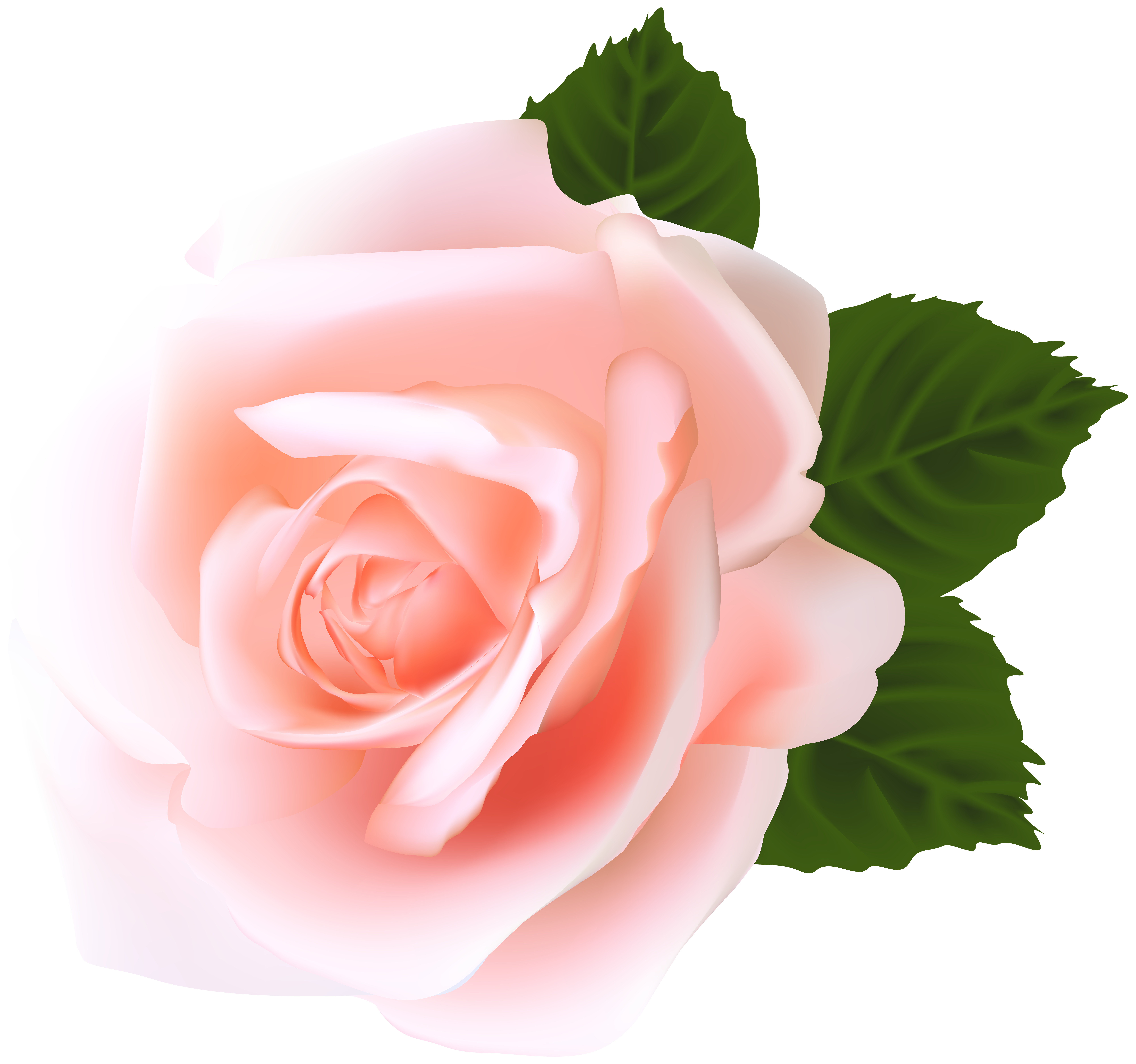 Rose Png Clip Art Gallery Yopriceville High Quality Images And Transparent Png Free Clipart Pink Rose Png Rose Images Hd Flower Wallpaper