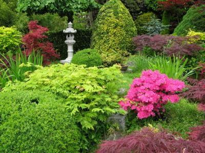 Cr ez un massif japonais en 3 tapes arbustes de jardin Massif decoratif jardin