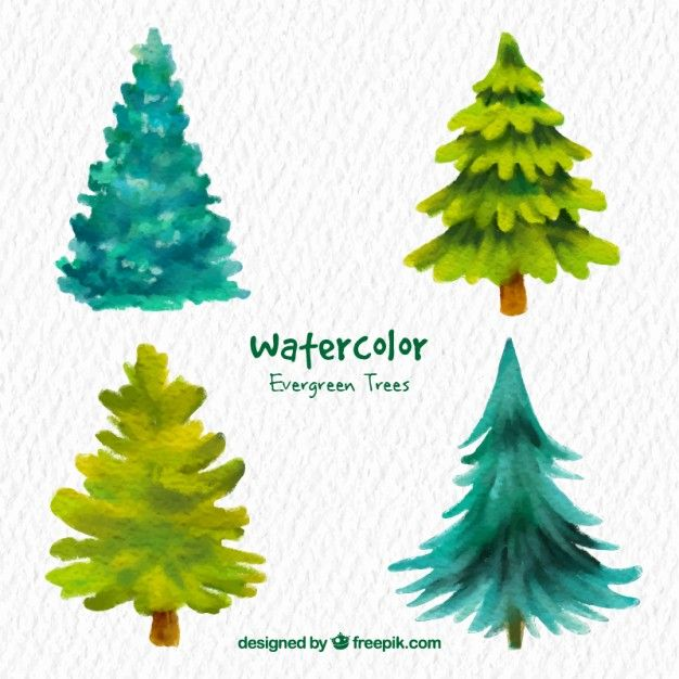 Download Watercolor Evergreen Trees For Free Watercolor