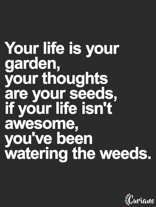 Curiano Quotes Life Quote Love Quotes Life Quotes Live Life Quote And Letting Gardening Quotes Funny Inspirational Quotes Motivational Quotes For Success