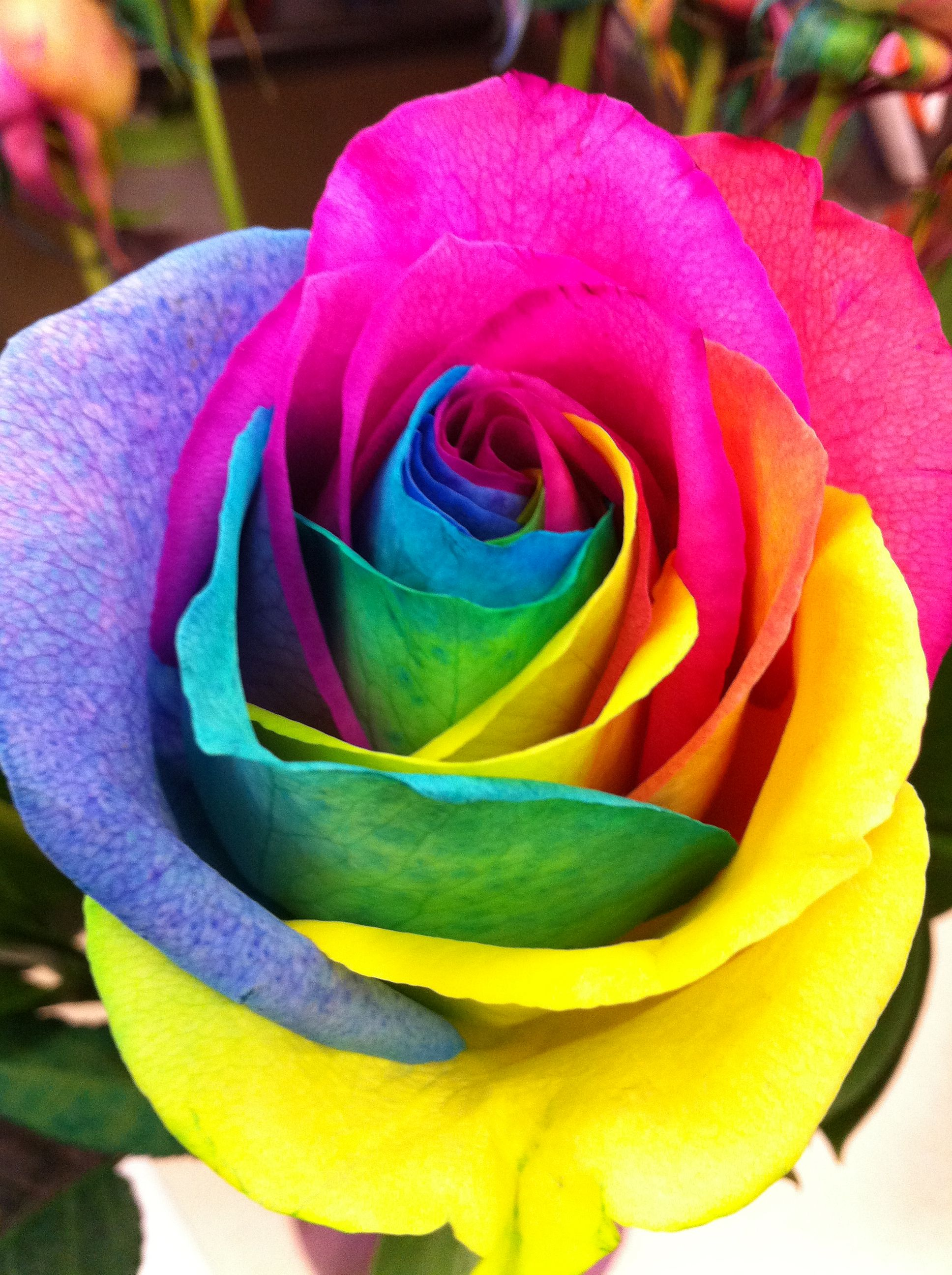 Tie dye rose ericka 39 s fave things pinterest flowers for How to make tie dye roses