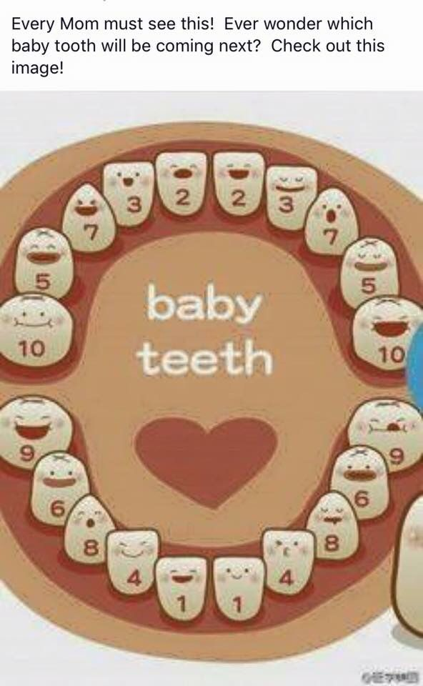 Baby Teeth Development First Time Father Baby food recipes, Baby