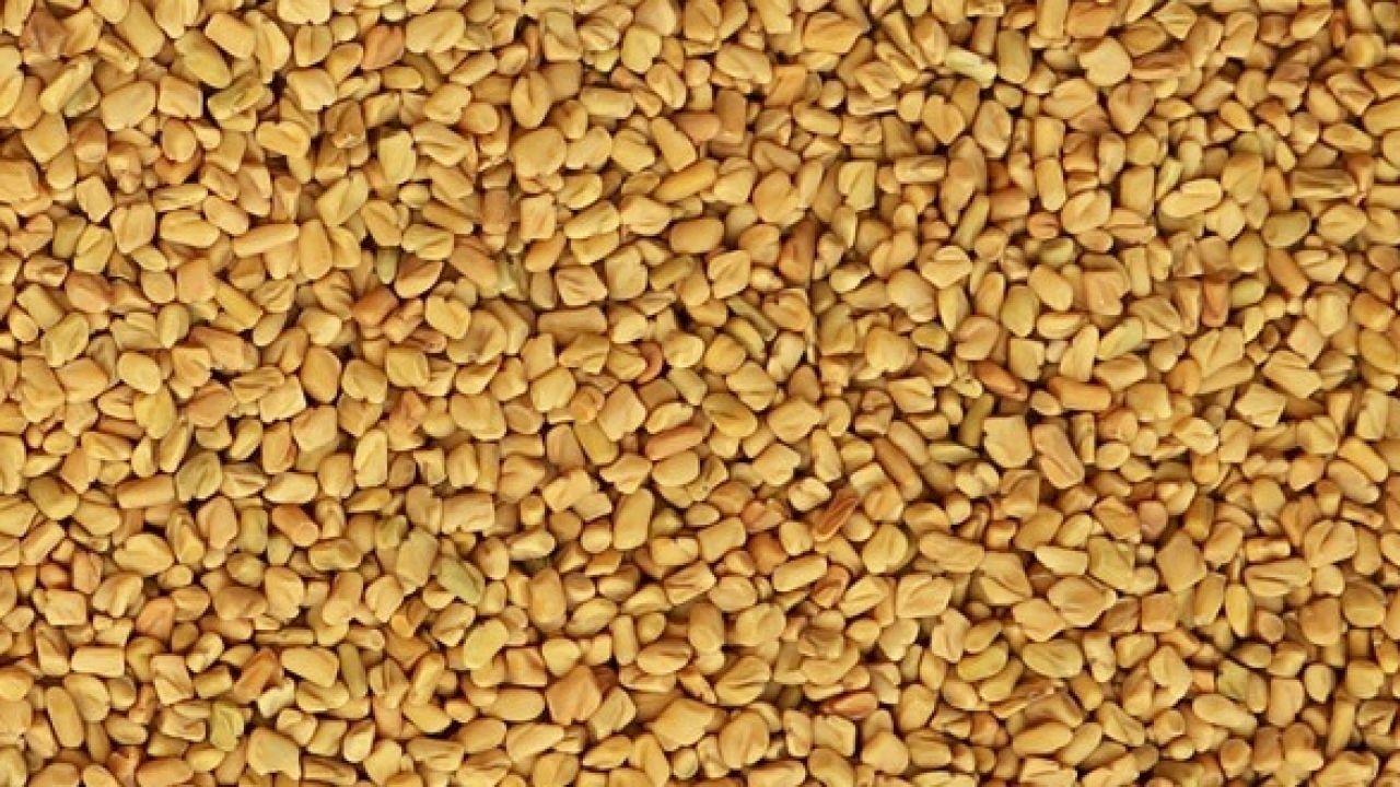 طريقة استخدام الحلبة للتسمين How To Dry Basil Herbs Basil