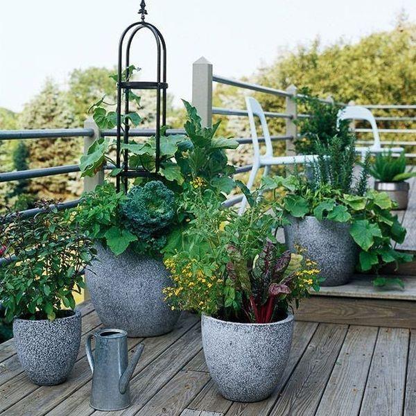 Urban Balcony Garden Ideas Part - 24: Winter Veggie Garden - Be Inspired This Winter On The Urban Balcony Blog.