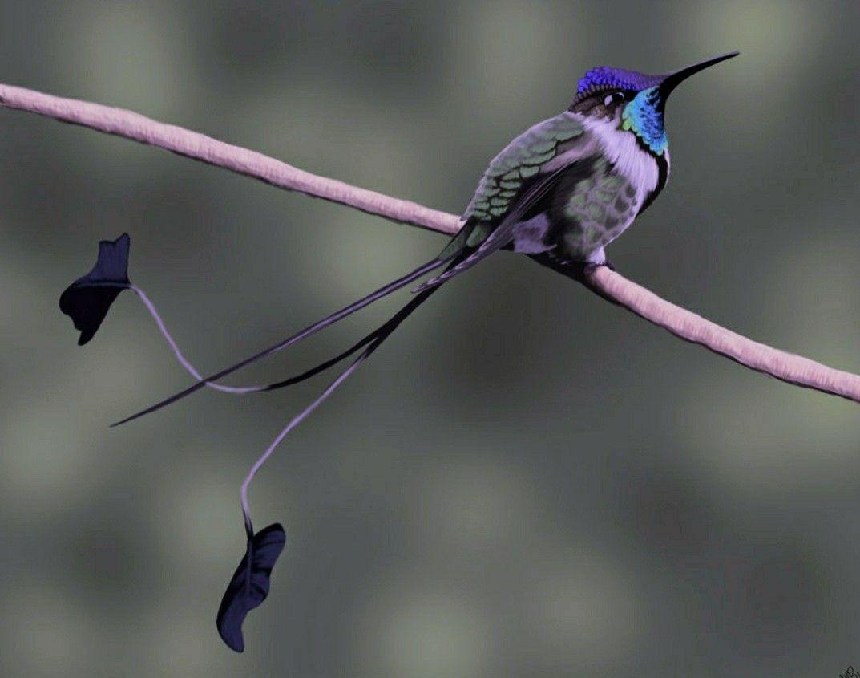 Resultado de imagen de colas colibri