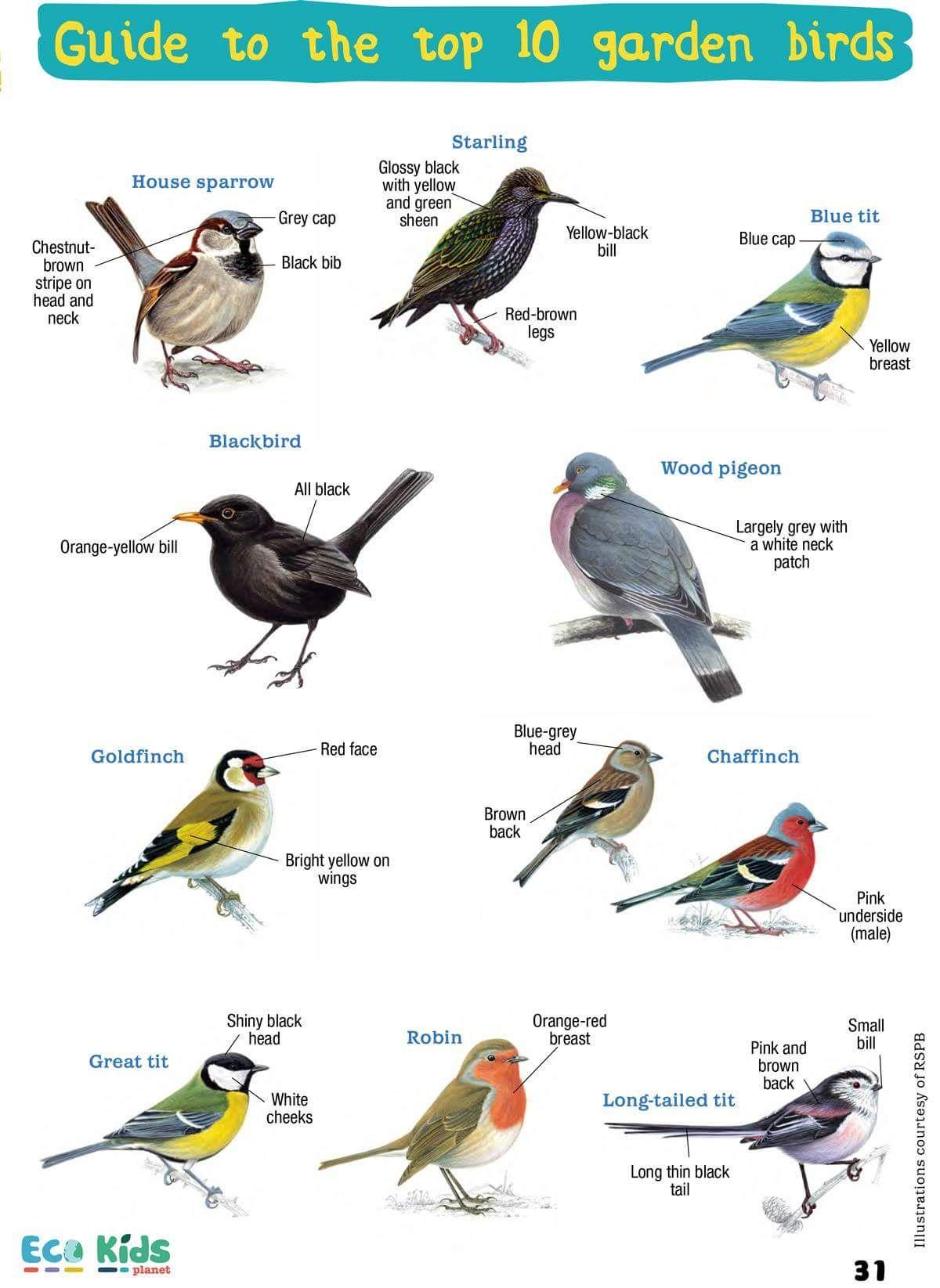Common Garden Birds