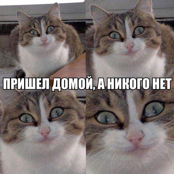 Memy Memy Na Segodnya Pinterest Humor Humor Ninjago Memes
